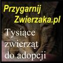 PrzygarnijZwierzaka.pl - Tysiące zwierząt do adopcji